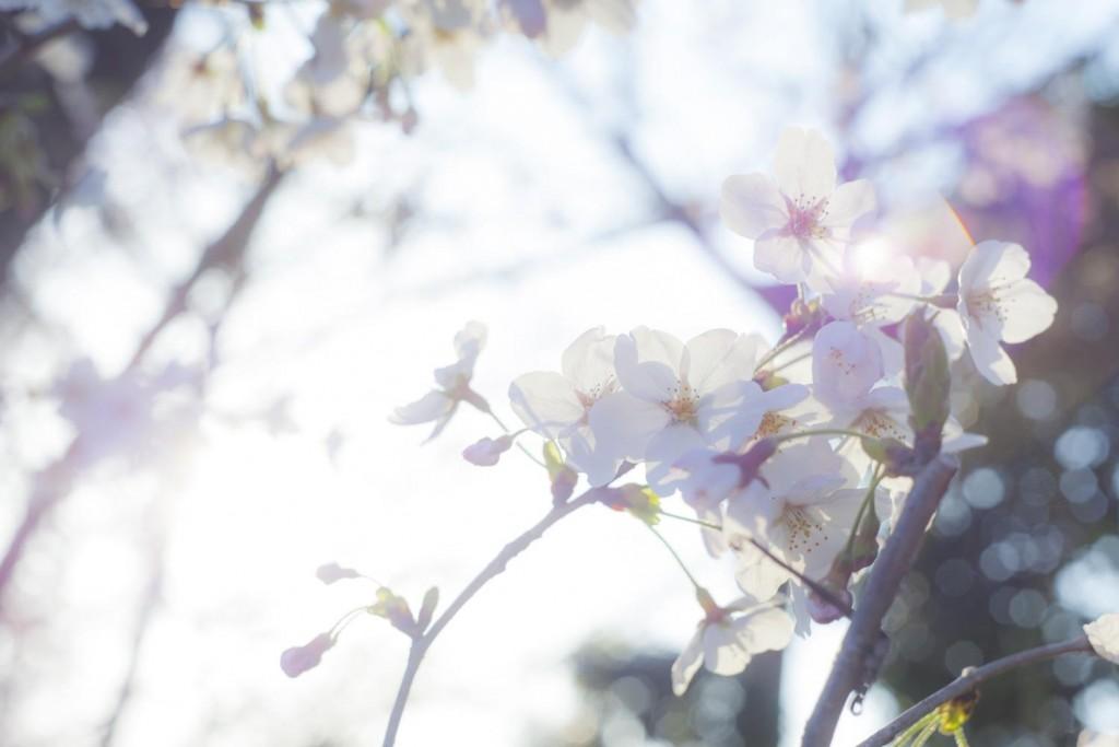 -shared-img-thumb-TSU88_sakurahuto_TP_V
